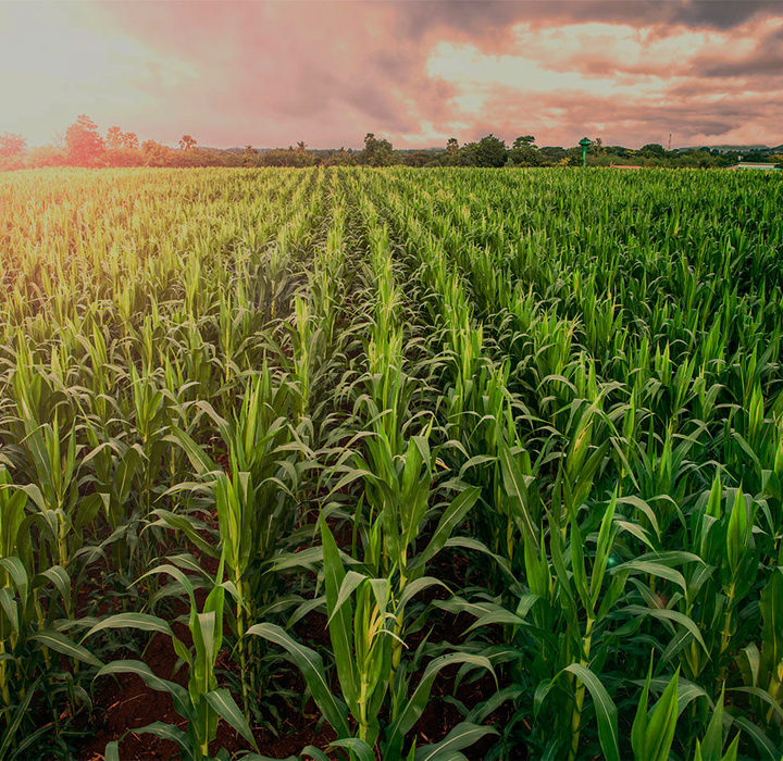 Desafios e Oportunidades para a Agricultura na América Latina