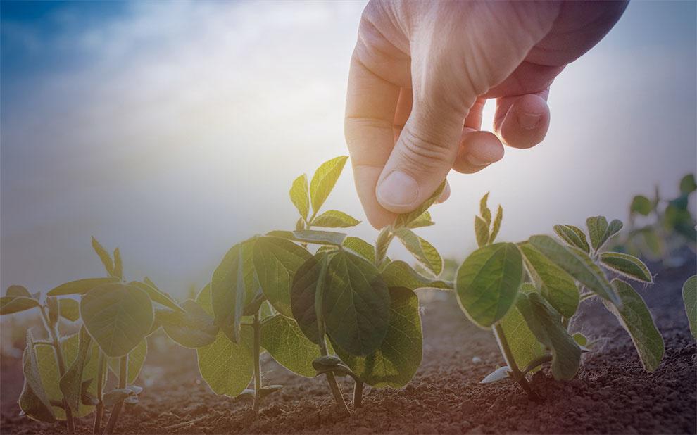 Debate online aborda recuperação judicial no agronegócio