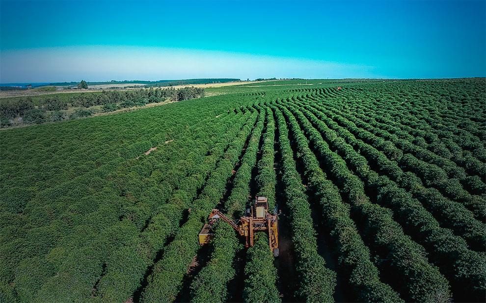 Autoridades e especialistas debatem dificuldades e perspectivas para agricultura na América Latina